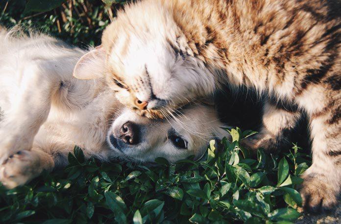 Cum sa curatati dintii pisicii sau ai cainelui