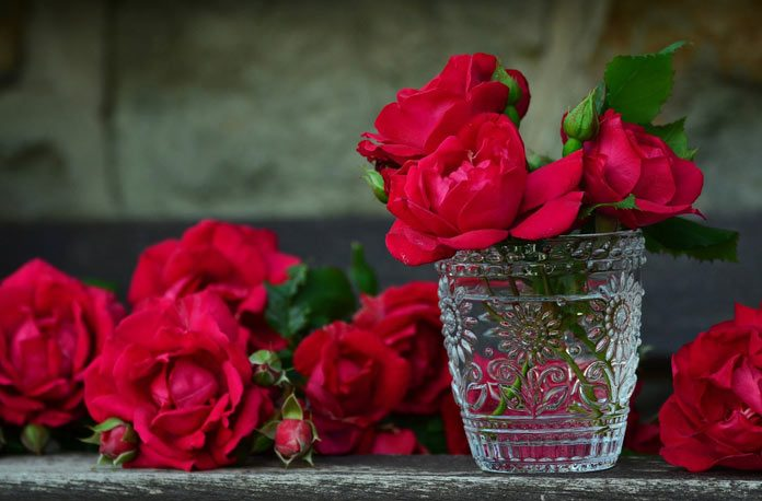 Cum sa cultivi trandafiri din varfuri taiate