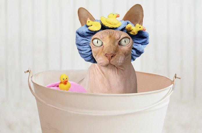 Cum sa faci baie unei pisici