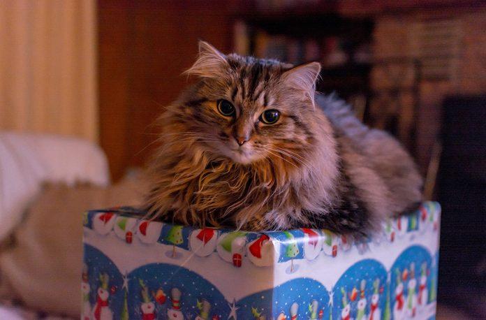 10 greseli pe care le fac noii stăpâni de pisici