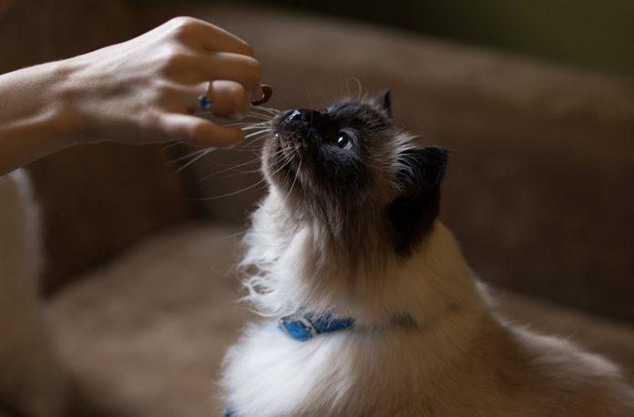 cum sa hranesti pisica echilibrat