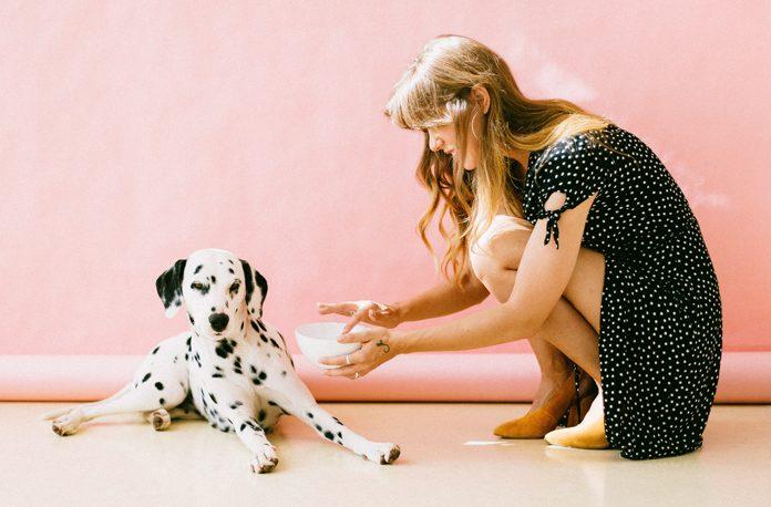 Cum sa cumperi mancare pentru animalul de companie