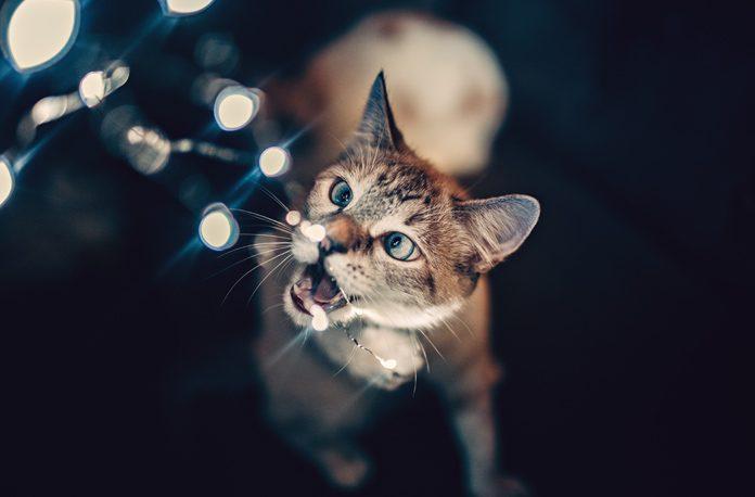 Cum faci ca animalele sa nu roada cablurile electrice